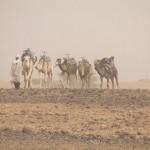Nómada con camellos en Marruecos