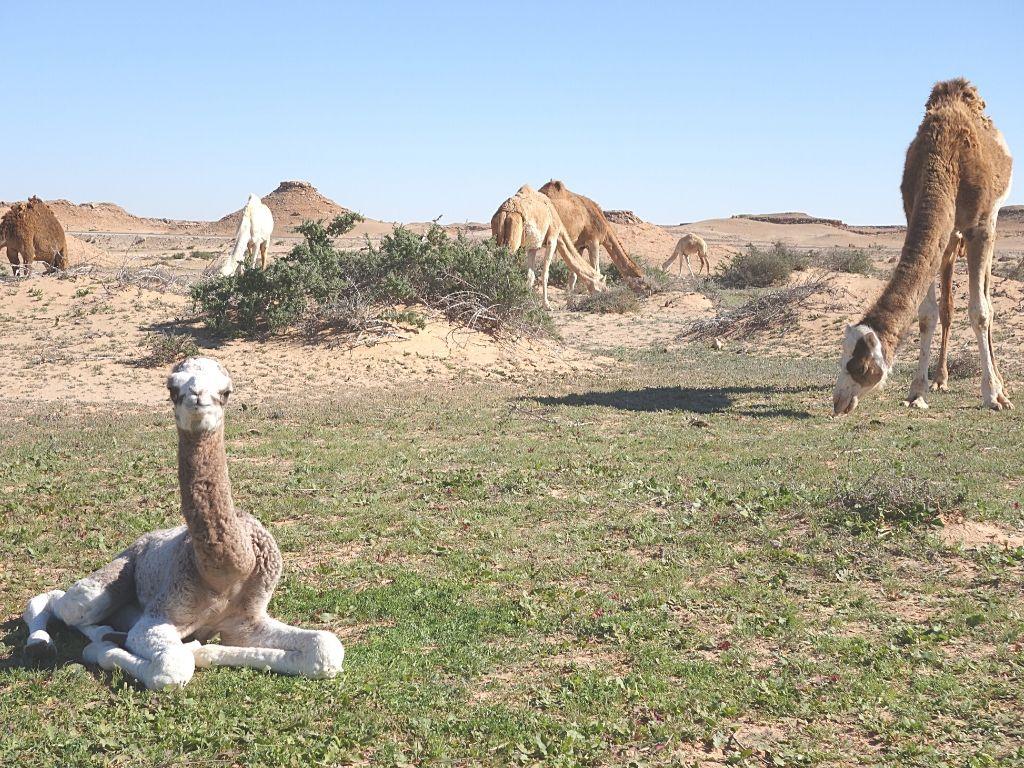 Atracciones en Dajla Marruecos