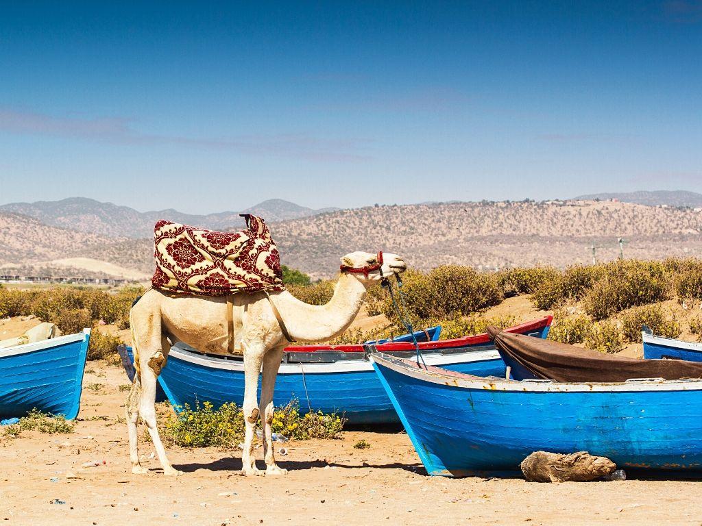 Ruta Todo de Marruecos » 17 días / 16 noches desde 1430€ 28