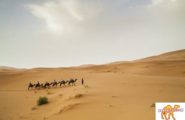 Dicen que viajando se fortalece el corazón, pues andar nuevos caminos hace olvidar el anterior. - Lito Nebbia