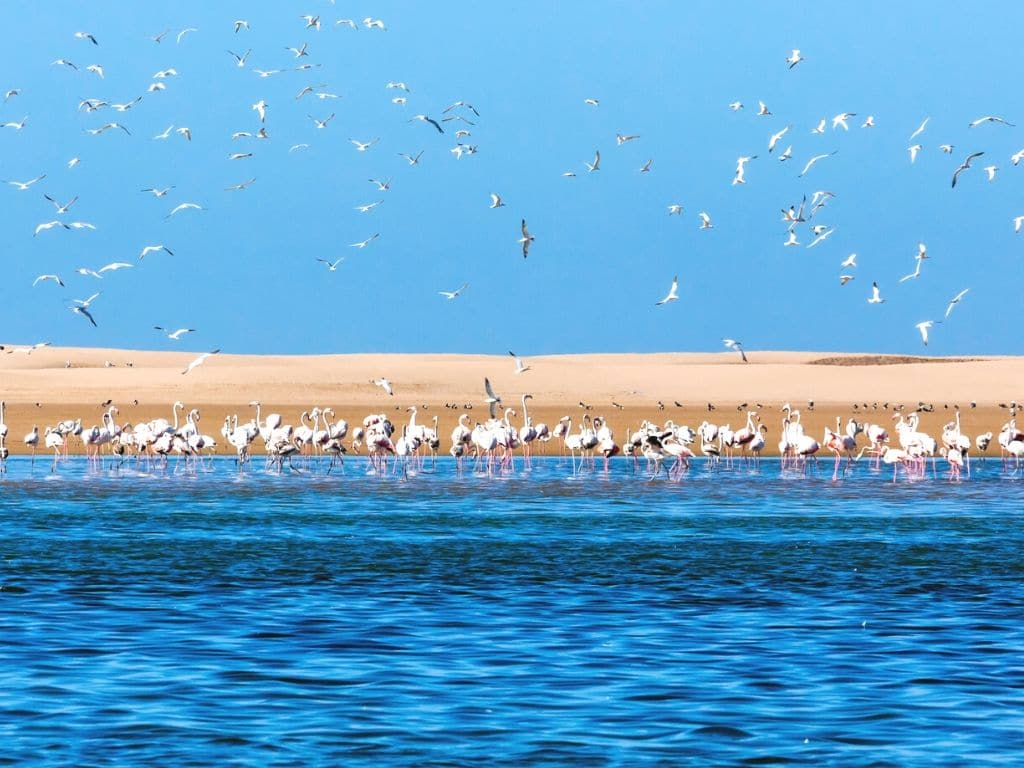 Parque nacional Khenifiss Marruecos