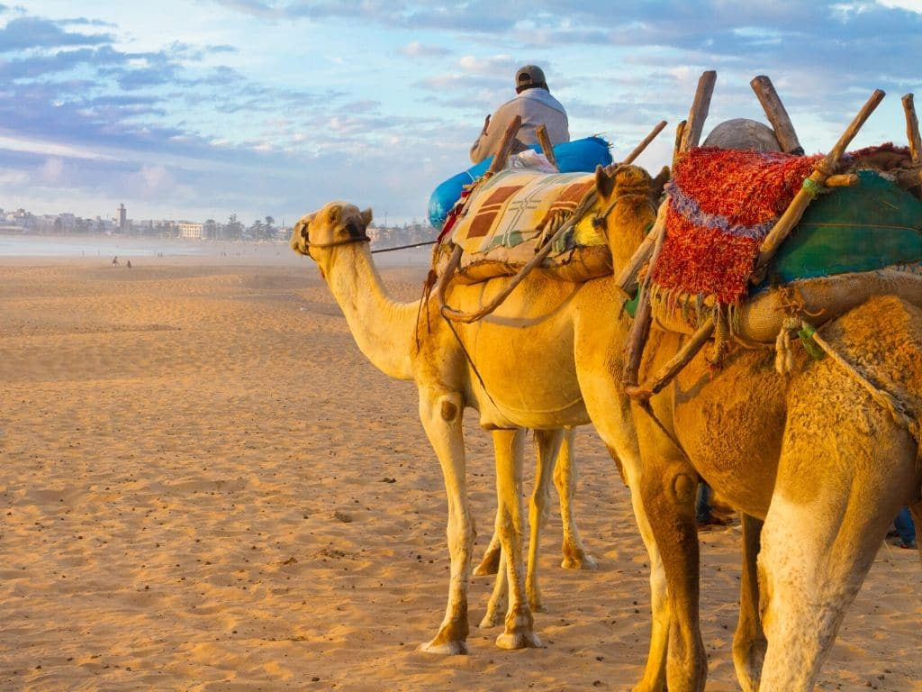 Paseo en Camello en Essaouira marruecos