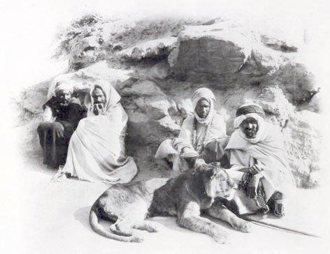 El león del Atlas de Marruecos
