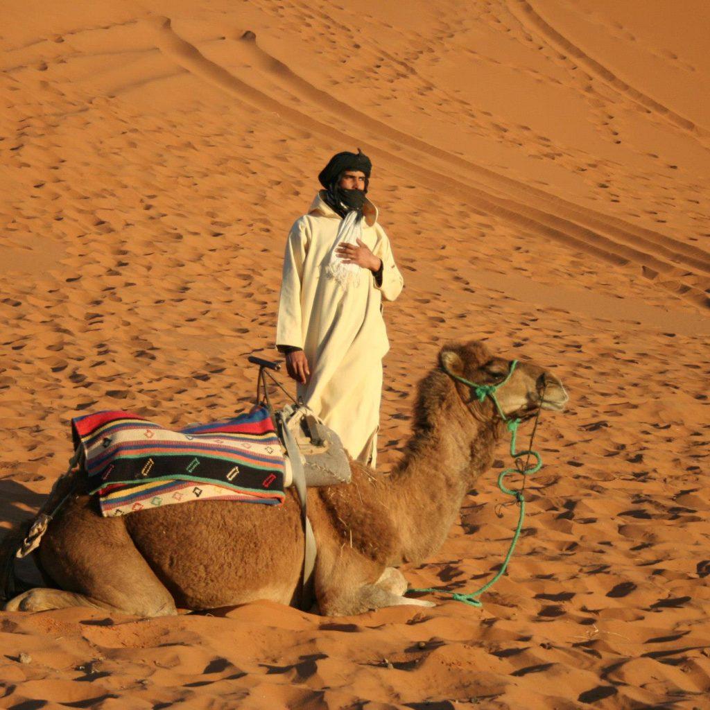 Paseo De Camello En Las Dunas