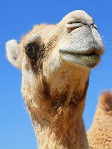 Agencia de Viajes Marruecos Com • Rutas y Viajes 10