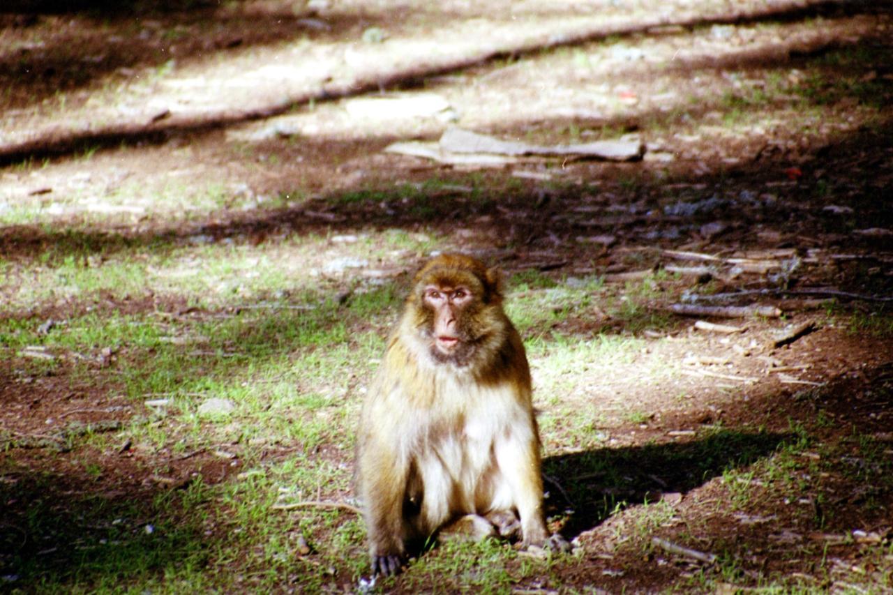 Mono en Azrou